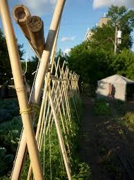 freestanding bamboo trellis for tomatoes gardening pinterest