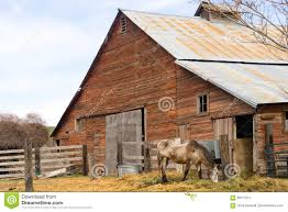 lone horse grazes on feed farm ranch barn corral stock photo