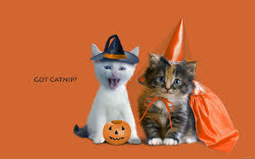 cute happy halloween images cute and funny pictures of animals 73 halloween pictures