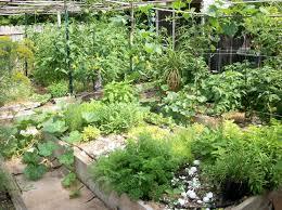 garden ideas herb garden planter box indoor herb pots raised