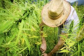 travel pot smoker u0027s guide to marijuana tourism in america time com