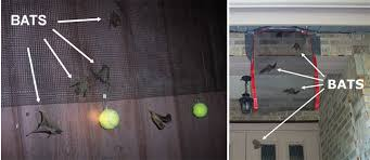 Remove Awning From House How To Remove Bats In The Attic Get Rid Of A Colony Of Bats