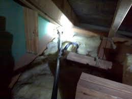 jobs in gardendale al snake removal u0026 snake control birmingham alabama area
