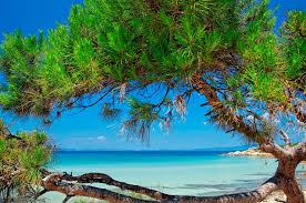 kassandra palace hotel halkidiki beach holidays chalkidiki