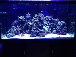 Live Rock Aquascaping Brs Rock Reef Saver Vs Pukani Reef2reef Saltwater And Reef