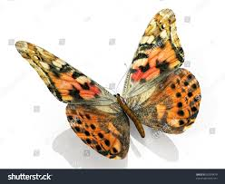beautiful butterfly wings stock illustration 91059479