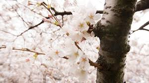 blooming blossoms facilities services