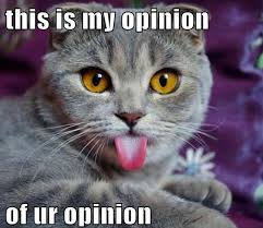 Cat Pictures Meme - this is my opinion cat meme cat planet cat planet