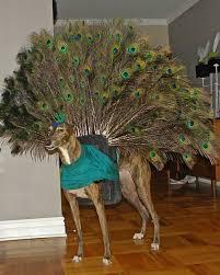 pets costumes halloween halloween pet costumes from the u0027 u0027martha u0027 u0027 audience martha stewart
