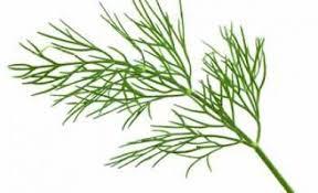 herbe cuisine cuisine aromatique herbe aromatique archives cuisine aromatique