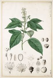 escape of the invasives top six invasive plant species in the 792 best botanical prints images on pinterest botanical