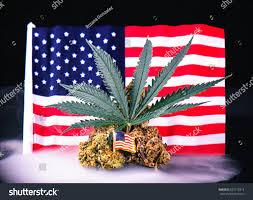 Colorado Flag Marijuana Cannabis Buds Leaf American Flag Smoke Stock Photo 655715314