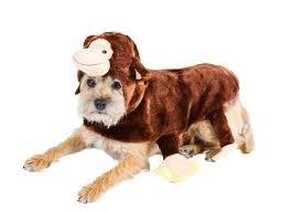donkey halloween costume u2013 canine styles
