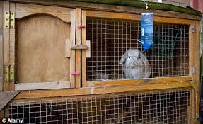 Sale Rabbit Hutches How Three Quarters Of Britain U0027s 2million Rabbits Are U0027left In