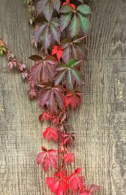 native arkansas plants 82 best gardening in arkansas images on pinterest plants
