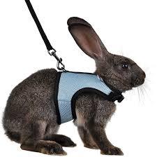 rabbit care ellie u0027s rabbitry
