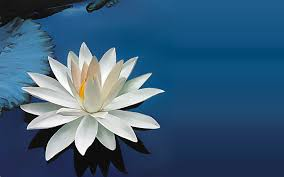 a lotus flower known is a drop unknown is an ocean