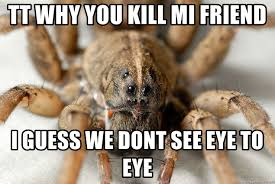 Kill Spider Meme - tt why you kill mi friend i guess we dont see eye to eye big scary