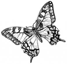 butterfly flying drawing monarch butterfly flying stock