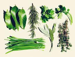 Winter Garden Family Health Center The Ultimate Spring Project An Easy Herb Garden Goop