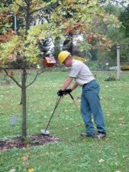 tree service needed trees change color drop
