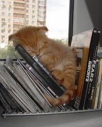 25 awkward cat sleeping positions 26 50 animal babies kitty