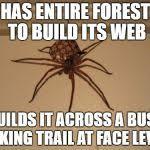 Spider Meme - scumbag spider meme generator imgflip