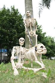 70 best crazy bonez skeletons images on pinterest skeletons