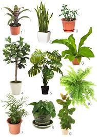 best small indoor house plants