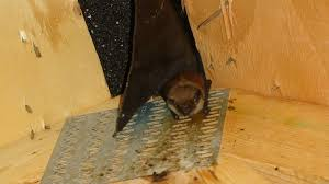 bat removal from attic in los angeles county