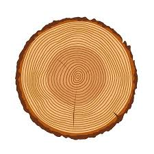 tree rings images Tree rings tree trunk rings isolated wood ring texture tree jpg