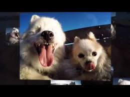 Blind Dog And His Guide Dog A Blind Dog And His Best Friend Youtube