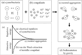 a perspective of chemical treatment for cyanobacteria control