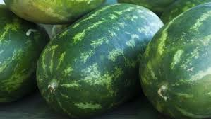 history of the watermelon where is watermelon grown in the world reference com