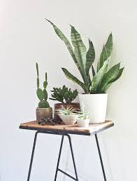 480 best plants images on pinterest plants succulent plants and