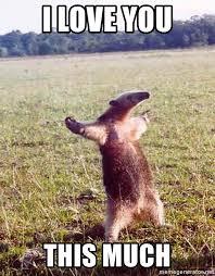 I Love You This Much Meme - i love you this much anteater meme generator