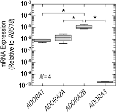 concurrent agonism of adenosine a2b and glucocorticoid receptors