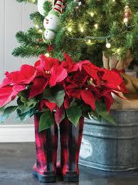 holiday houseplants hgtv
