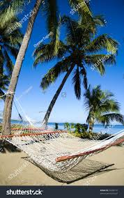 hammock on tropical sandy beach palm stock photo 25208710