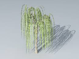small willow tree 3d model cinema 4d autodesk fbx files free
