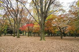 trees in park change color stock photo image 83031439