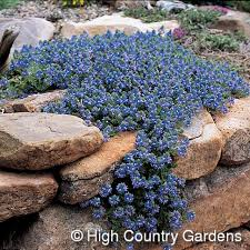 304 best rock gardens u0026 ground covers images on pinterest