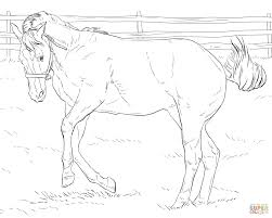 coloring horse stallion coloring page amazing games photo