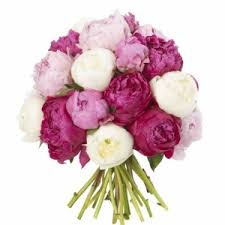 peonies flower delivery mixed peonie bouquet mixed peonies available may july new