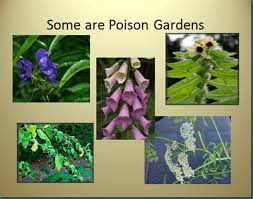 What Are The Gardening Zones - gardening naturally with claudia poison plants a garden style