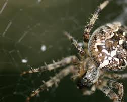 hd spider wallpaper 6889134
