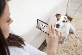 10 Tips For Taking Your by Our Top 10 Tips For Getting Your Pet Camera Ready Get Your Pet