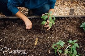 squash u2013 pinetree garden seeds