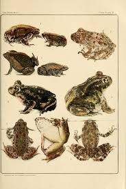 file frog book 1906 color plate 02 jpg wikimedia commons
