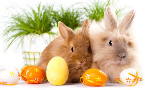 easter easter bunny wallpapers free